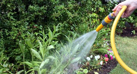 save-water-garden